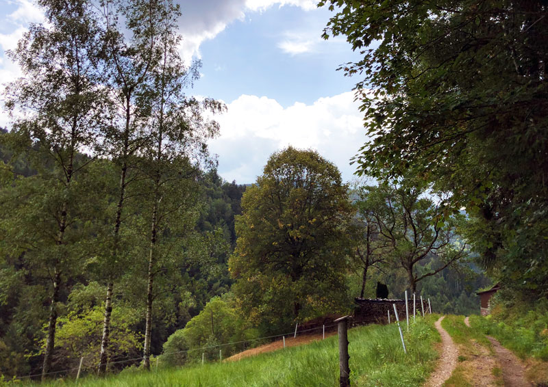 Weg durch Wiesenlandschaft
